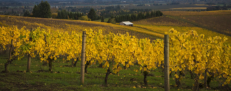 Top 5 Wine Destinations in the USA & Canada