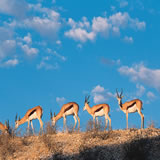 4nts Cape Town, 1nt Addo National Park & 3nts Indian Ocean Beach