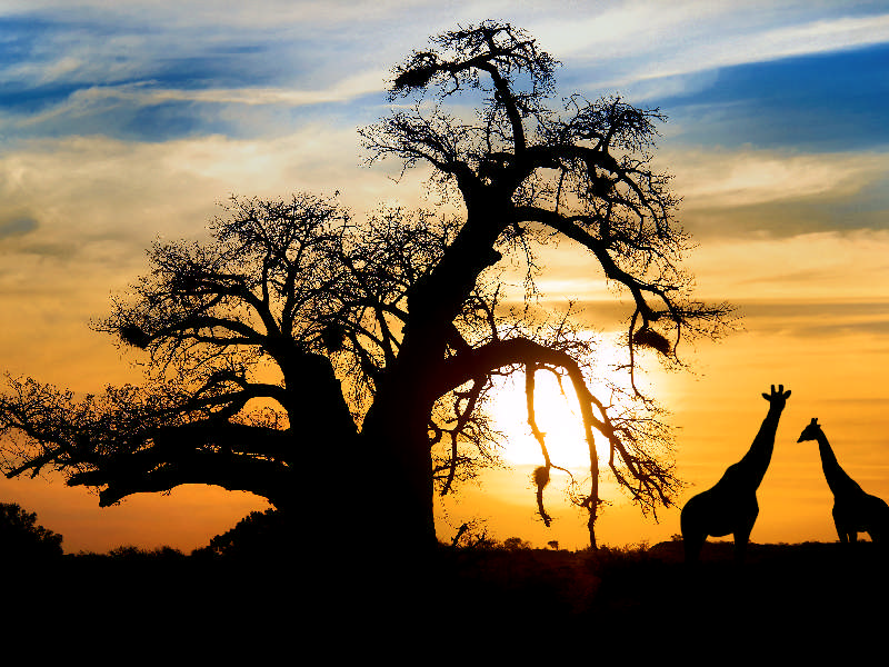 South Africa Travel Blogs Stories