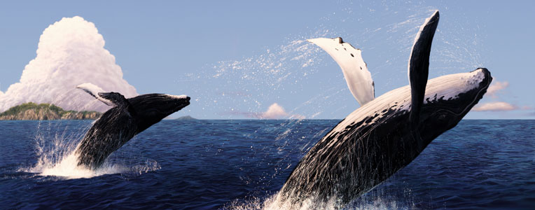 Top 5 Places in the World for Whale Watching