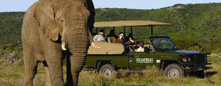 Animal magic at Shamwari Game Reserve