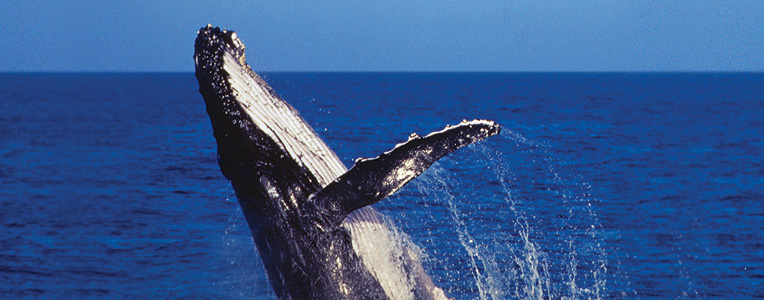The ultimate guide to whale watching
