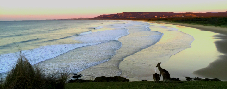 Where to spot the best wildlife in New South Wales