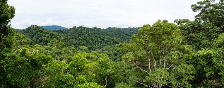 10 Things You Never Knew About Borneo