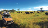 3 day Masai Mara Fly in Safari & 5nts Mombasa Beach
