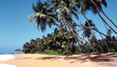 8 Day Discover Sri Lanka Tour & 5nts Beach Stay