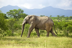 4nts Cape Town, 1nt Winelands & 2nts Kruger National Park