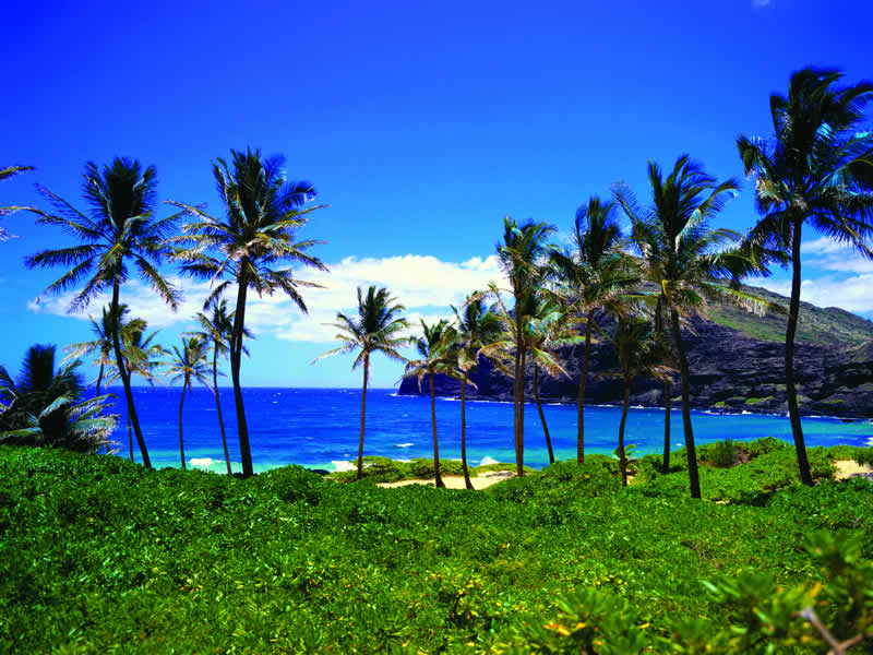 Hawaii Timeshares