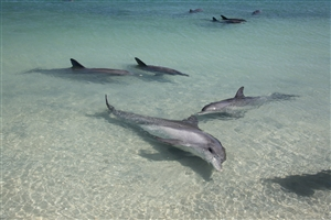 5 day Coral Coast & Dolphins