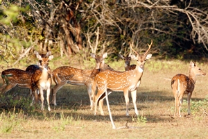6 day Sri Lanka Scenic and Wild life Tour