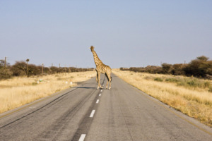 11 day Gems of Namibia Self-Drive