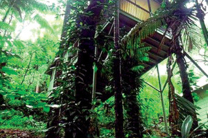 Daintree Eco Lodge & Spa, Daintree