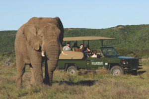 2nts Eastern Cape Safari & 3nts Beach Stay