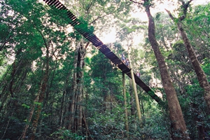 Rainforest - click to expand
