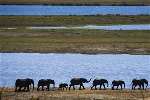 Chobe National Park - click to expand