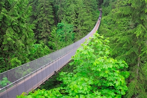 Capilano Bridge - click to expand