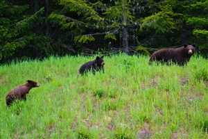 4 Day Grizzly Bear Adventure at Knight Inlet Lodge