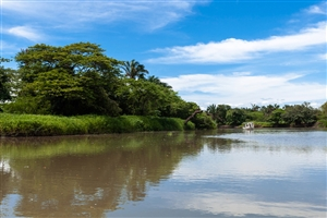 Sarapiqui River - click to expand