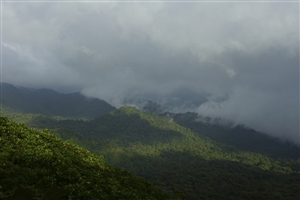 Monteverde Cloud Forest - click to expand