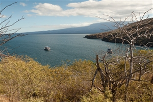 8 Day Western Galapagos Islands on Yacht La Pinta