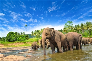 6 Day Experience Sri Lanka