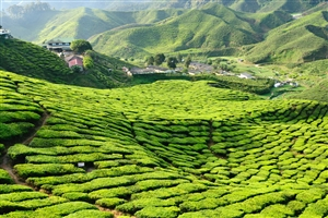 3 Day Cameron Highlands