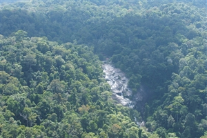 Taman Negara National Park - click to expand