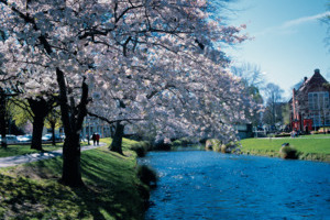 3nts Christchurch, 3nts Queenstown & 10 day Best of North Island Self Drive Tour