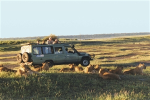 Game Drive - click to expand