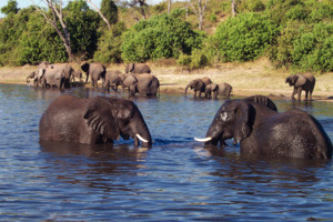 5 Day Victoria Falls & Chobe National Park
