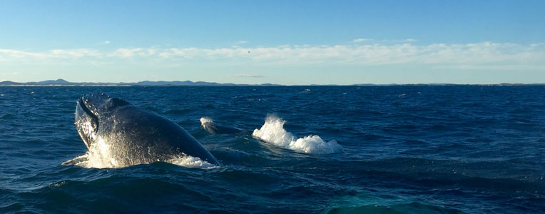 Port Stephens Whale Watching